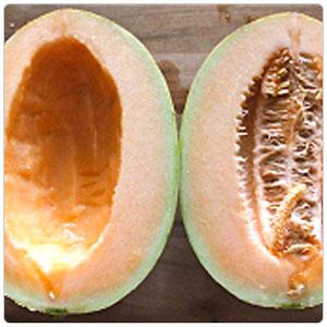Melon description