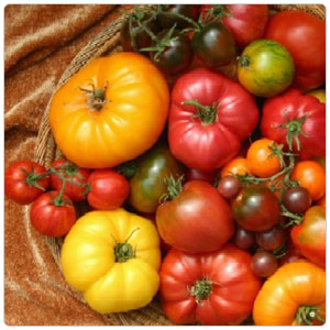 heirloom-tomatoes-category