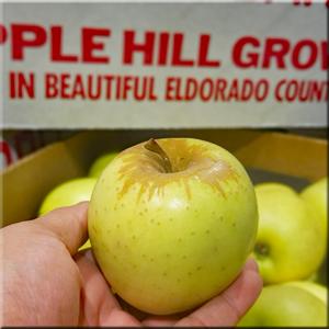 Apple - Golden Delicious