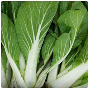 Bok Choy Cabbage