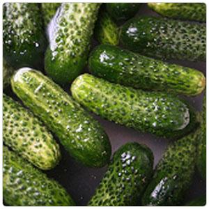 Cucumber - Pickling