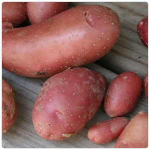 Fingerling Red French Potato