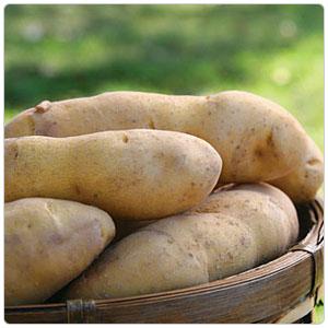 Princess La Ratte Potato