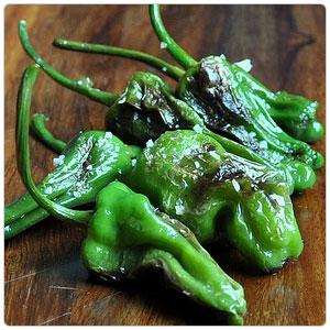 Pepper - Padron