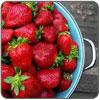 Puree - Strawberry