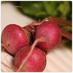 Turnip - Scarlet Queen