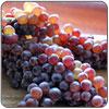 Grapes - Champagne aka Zante Currants